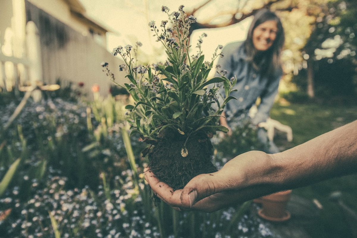 A man holds up a flower as he prepares to plant it in the flower bed; in the background, a woman is out of focus smiling.
